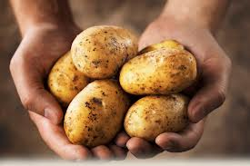 potato handful