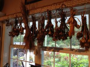 Lori's drying of garlic, wheat and corn